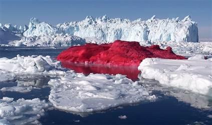 040325_hmed_iceberg_1130a.h2.jpg