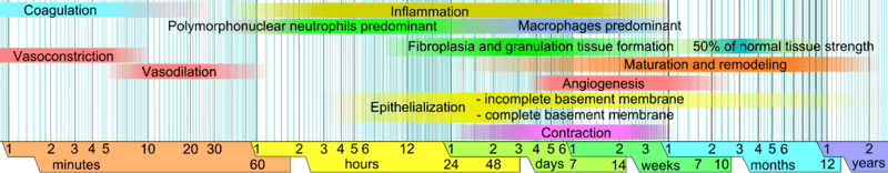 1024px-Wound_healing_phases.png