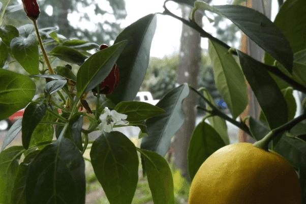 2017-03-09-pf-indoor-garden-png.114295.png