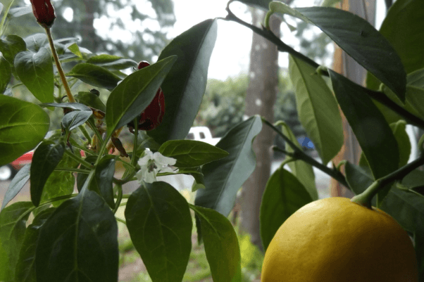 2017.03.09.pf.indoor.garden.png