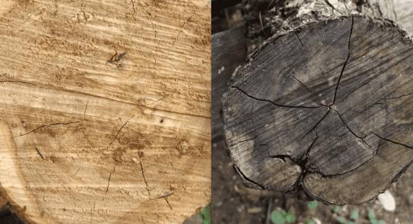 2017.06.20.natural.cracks.in.rhody.wood.png
