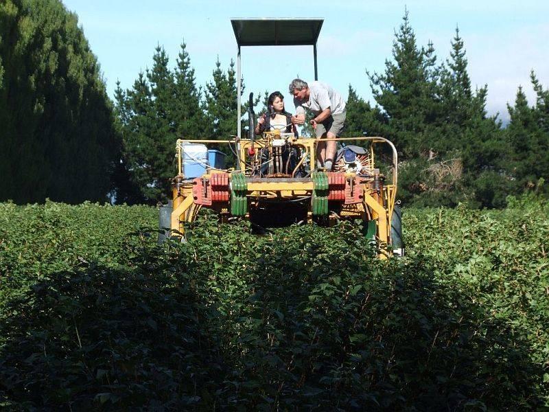 (2136) on the harvester1.jpg