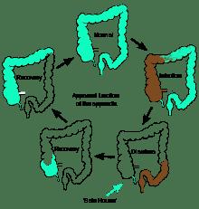 220px-Appendix_function_diagram.svg.png