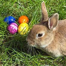 220px-Easterbunny_1.jpg