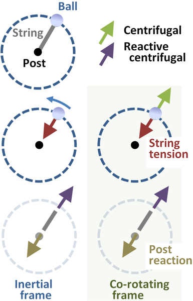385px-Reactive_centrifugal_and_centrifugal_forces.PNG