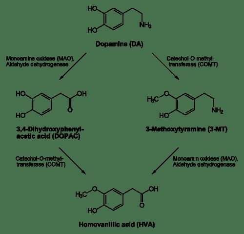 500px-Dopamine_degradation.svg.png