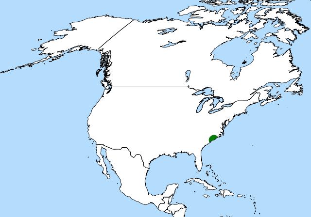 640px-Dionaea_distribution_%28revised%29.svg.png