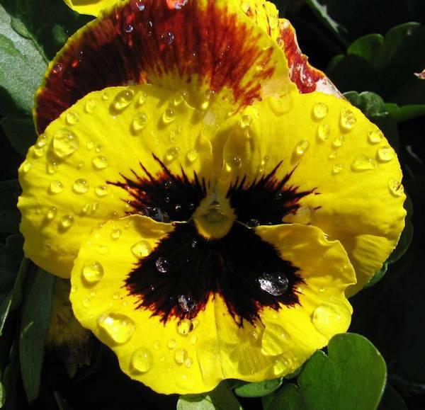 _flower1l-jpg.101772.jpg