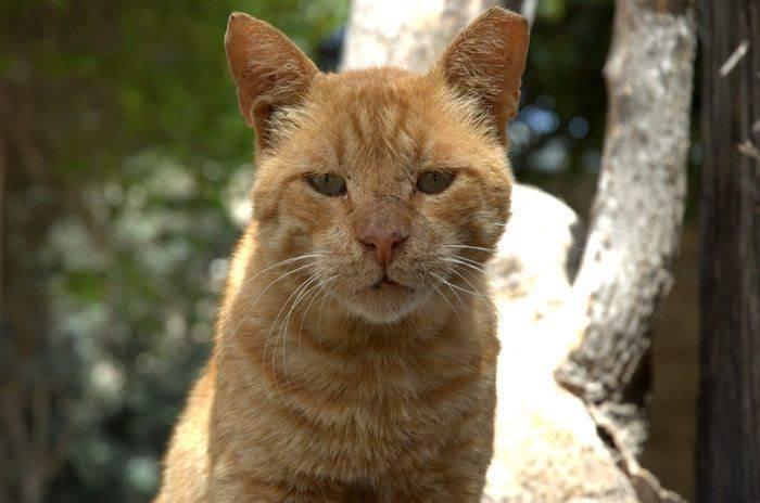 acre-cat.jpg