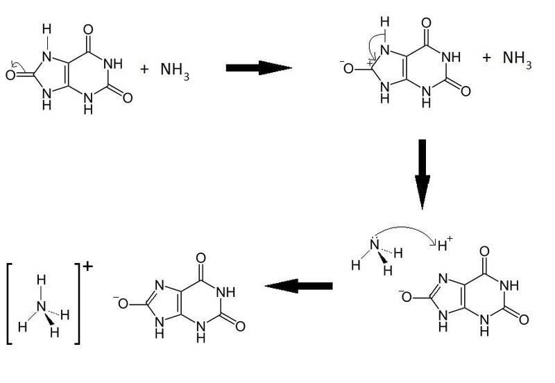Ammonium acid urate mechanism.jpg