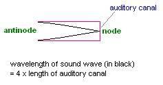 auditory.jpg