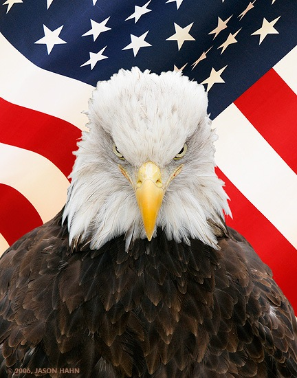 bald_eagle_flag_small.jpg