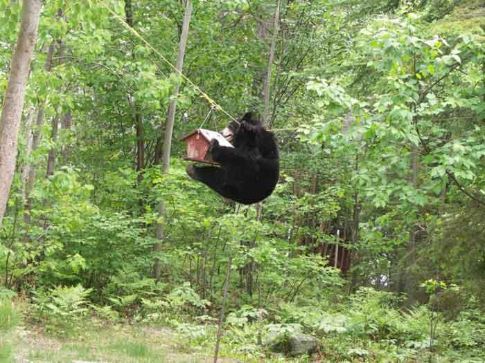 Bear-4.jpg