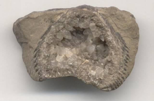 brachipodcrystals.jpg