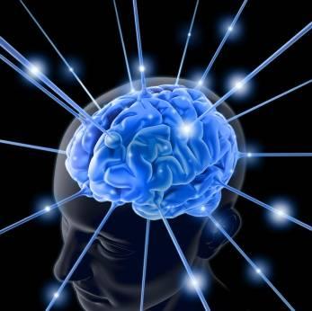brain-763982-1.jpg