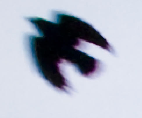 ca-bird.jpg