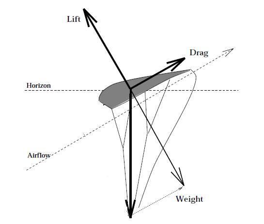 canopy_diagram.jpg