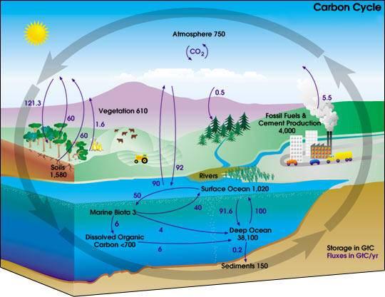 carbon_cycle_NASA.jpg