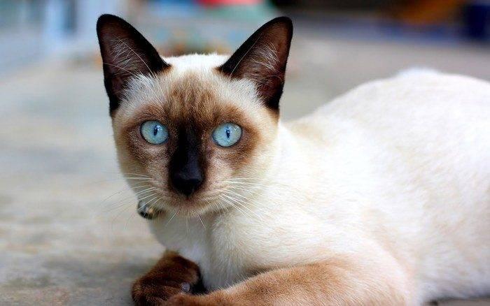 cat%2Bwallpaper%2B1.jpg