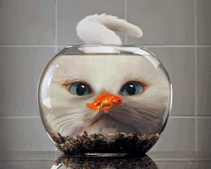 Cat_looking_at_fish_in_a_bowl.jpg