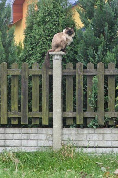 cat_monument.jpg