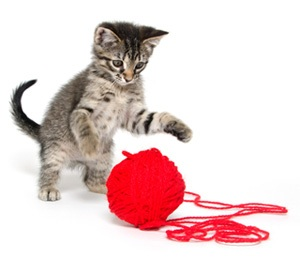 cat_with_string.jpg