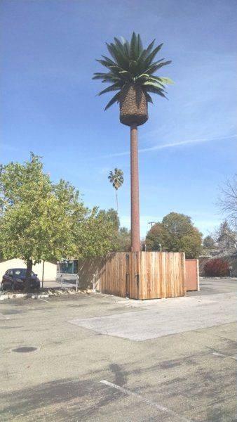 cell-tower-palm-tree-in-santa-clara-jpg.jpg