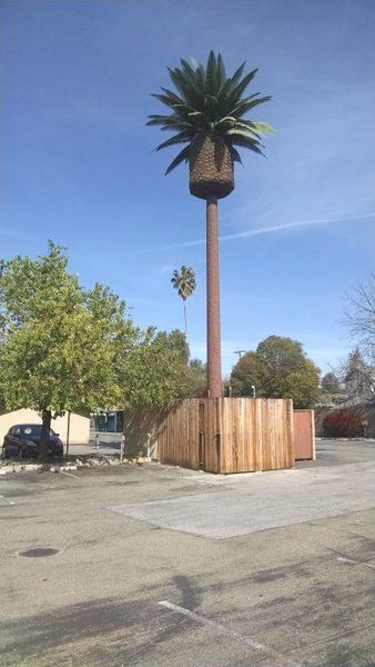 Cell Tower Palm Tree in Santa Clara.jpg