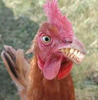 chicken_with_teeth.jpg