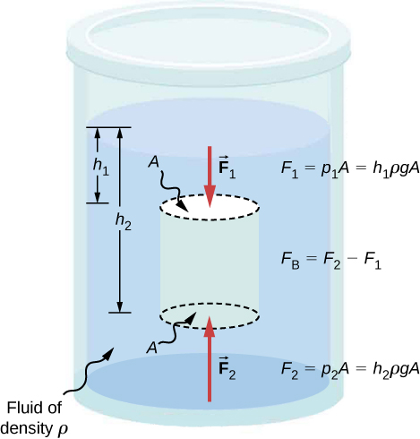CNX_UPhysics_Figure_14_04_NetBuoyant.jpg