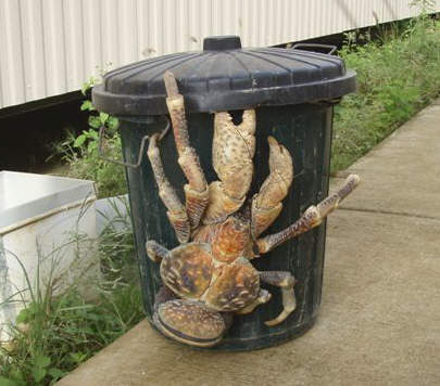 coconut_crab.jpg