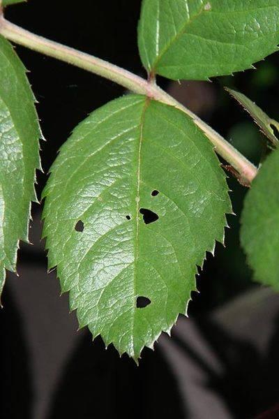 concerned_leaf.jpg