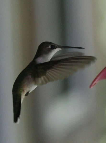 cont_H_bird.jpg