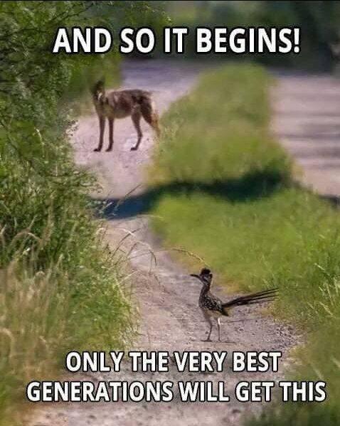 coyote and roadrunner.jpg