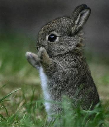 cute-little-bunny-rabbit1.jpg