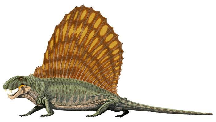 Dimetrodon_grandis.jpg