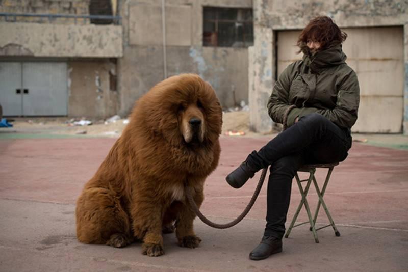 dogs-puppy-look-like-bears-12jpg.jpg
