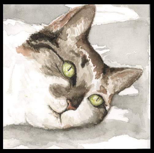 dreaming_cat.jpg