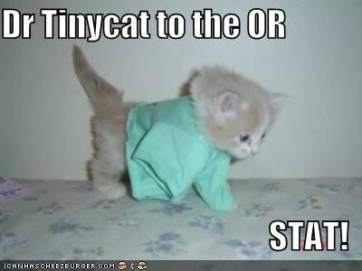 Drtinycat.jpg