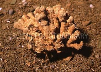 E4420229-Fossil_sponge-SPL.jpg