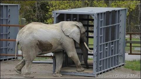 elephant-crate-091913_thumb.jpg