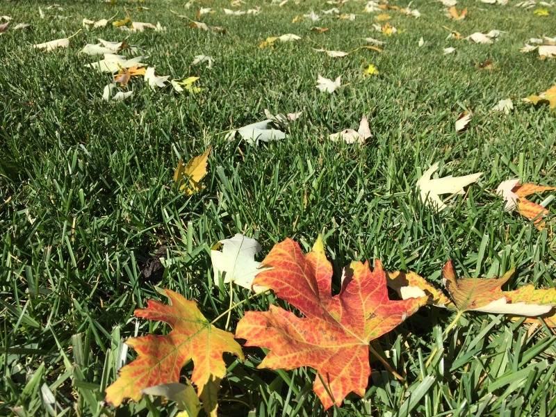 fall1_zpsb4df4b2d.jpg