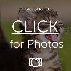 FindMass.jpg