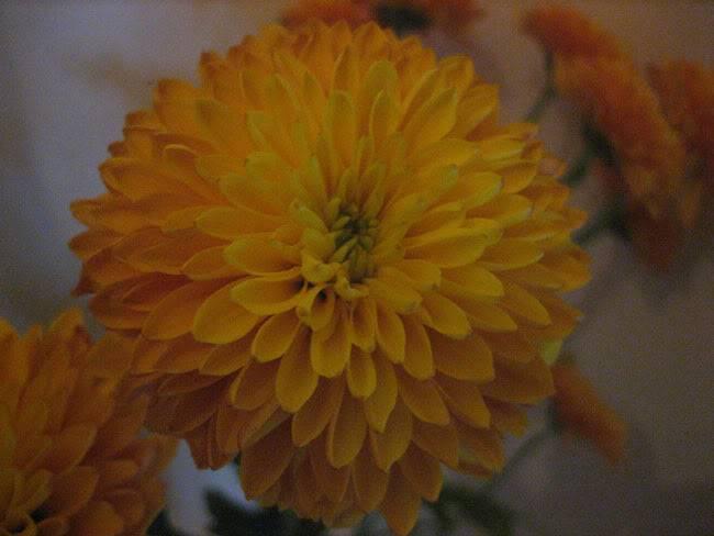 flowercloseup2copy.jpg