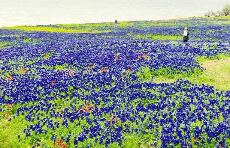 flowers-jpg.jpg