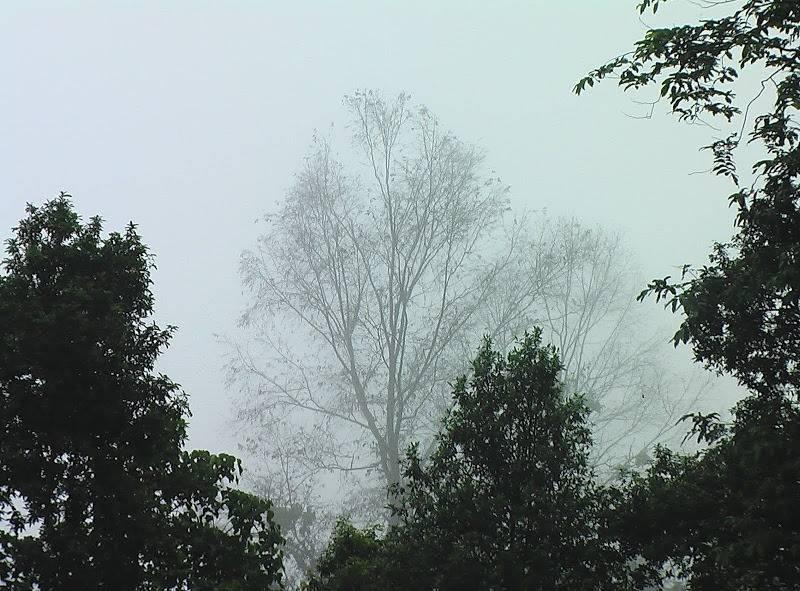 fog-image-jpg.jpg