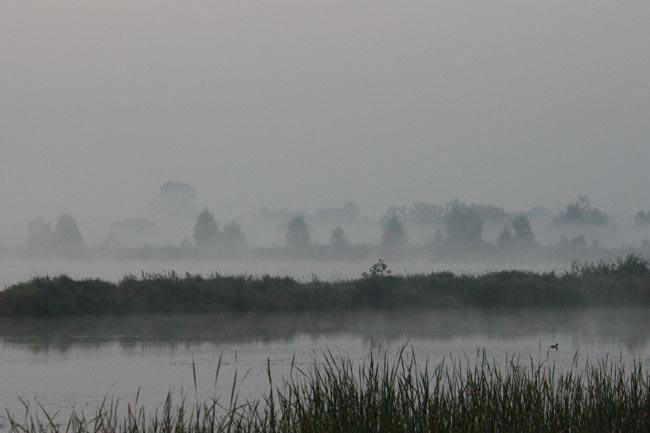 fog_over_ponds.jpg