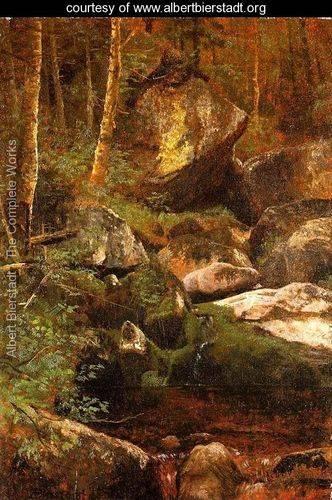 Forest-Stream.jpg