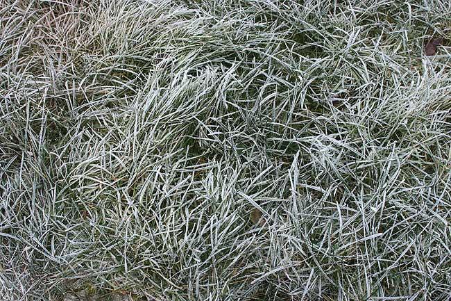 frozen_grass.jpg