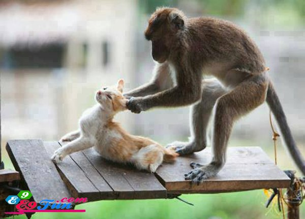 Funny-Monkey-Playing-With-Cat.jpg